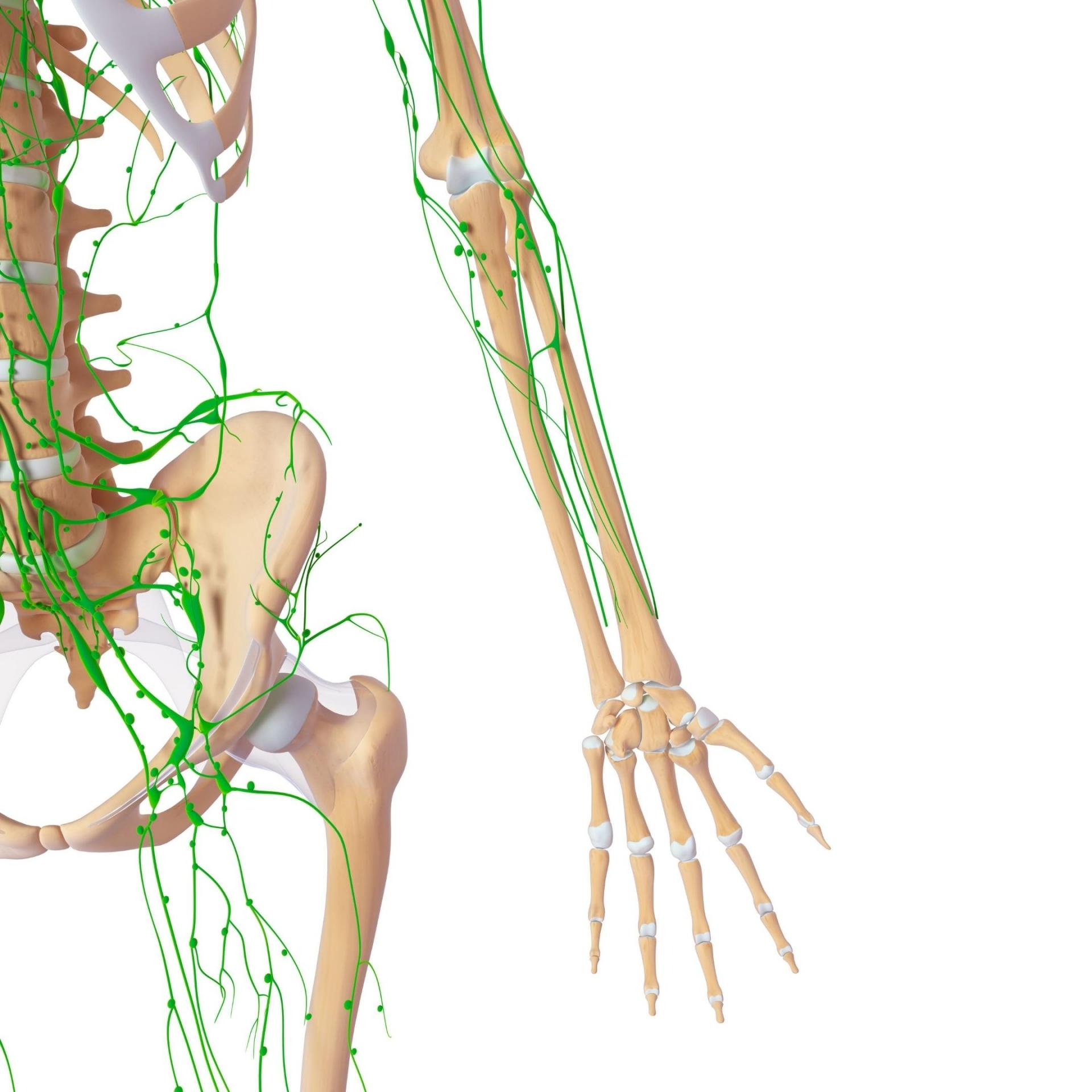 Lymphatic system pic for website